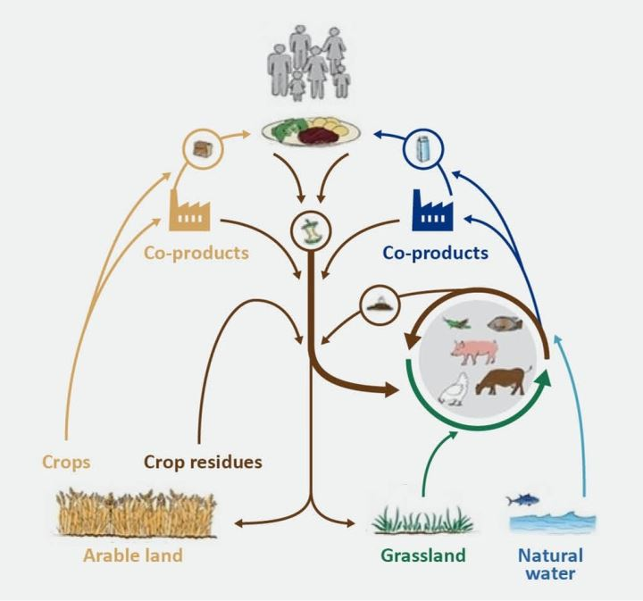 Afbeelding: Circular food production model